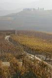 Weinberge nähern sich Barolo, Piemonte Italien Stockbilder