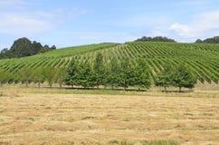 Weinberge in Oregons-Weinanbaugebiet Lizenzfreies Stockfoto
