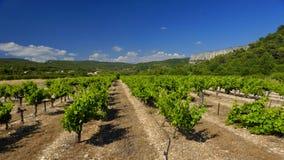 Weinberge in Provence lizenzfreies stockbild
