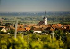 Weinberge in Rheinland Pfalz im Frühsommer lizenzfreie stockfotografie