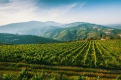 Weinberge sind auf Hügel des Duero-Tales Lizenzfreies Stockbild
