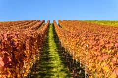 Weinberge in Stuttgart - sch?ne Weinregion im S?den von Deutschland stockfoto