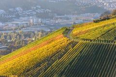 Weinberge in Stuttgart - sch?ne Weinregion im S?den von Deutschland stockbilder