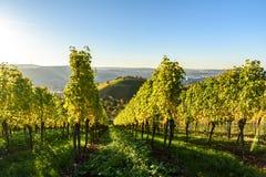 Weinberge in Stuttgart - sch?ne Weinregion im S?den von Deutschland stockbild