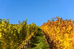 Weinberge in Stuttgart - sch?ne Weinregion im S?den von Deutschland lizenzfreie stockfotografie