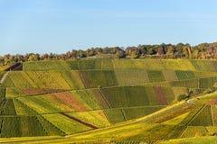 Weinberge in Stuttgart - sch?ne Weinregion im S?den von Deutschland stockfotografie