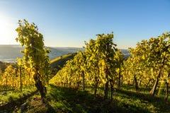 Weinberge in Stuttgart - sch?ne Weinregion im S?den von Deutschland stockfotos