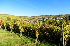Weinberge in Stuttgart, Uhlbach am Neckar-Tal - sch?ne Landschaft im autum in Deutschland lizenzfreie stockbilder