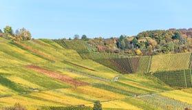 Weinberge in Stuttgart, Uhlbach am Neckar-Tal - sch?ne Landschaft im autum in Deutschland lizenzfreie stockfotos