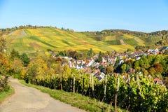 Weinberge in Stuttgart, Uhlbach am Neckar-Tal - sch?ne Landschaft im autum in Deutschland stockbilder