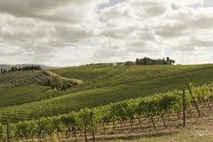 Weinberge in Toskana Lizenzfreies Stockfoto
