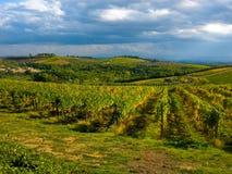 Weinberge in Toskana, Italien Stockfotografie
