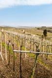 Weinberge und Ackerland auf den Hügeln im Frühjahr Stockfotografie