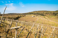 Weinberge und Ackerland auf den Hügeln im Frühjahr Stockbilder