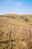 Weinberge und Ackerland auf den Hügeln im Frühjahr Stockfoto