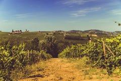 Weinberge und Hügel in Italien Lizenzfreie Stockfotos