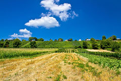 Weinberge und traditionelle Häuschen auf grünem Hügel Stockfoto