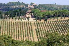 Weinberge von Badia di Passignano, Toskana, Italien Stockbilder