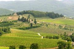 Weinberge von Chianti (Toskana) stockfotos