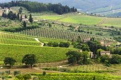 Weinberge von Chianti (Toskana) stockfoto