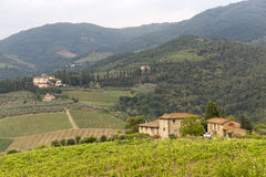 Weinberge von Chianti (Toskana) lizenzfreie stockfotos