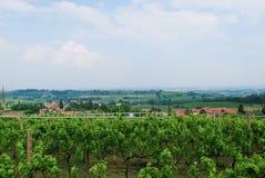 Weinberge von Custoza-Wein stockbilder