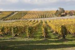 Weinberge von Loire Valley Stockfotos