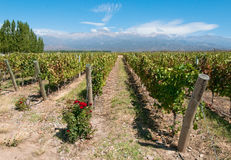 Weinberge von Mendoza, Argentinien Lizenzfreie Stockfotos