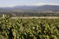 Weinberge von Olivenölseife-La Mancha Stockfotografie