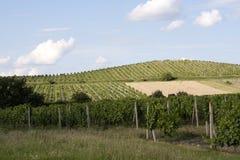 Weinberge von Palava Lizenzfreies Stockbild