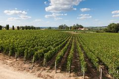 Weinberge von Saint Emilion, Bordeaux Stockbild
