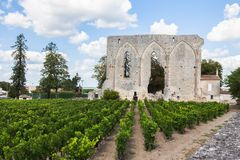 Weinberge von Saint Emilion mit ruinierter Kirche, Bordeaux Stockfotografie