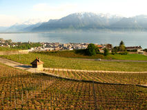 Weinberge von Vevey die Schweiz Lizenzfreie Stockfotos