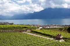 Weinberge von Vevey - Schweiz lizenzfreie stockbilder
