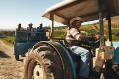 Weinbergsarbeiter, die Trauben an Weinfabrik liefern Stockbilder
