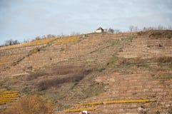 Weinbergterrassen auf Abhang im berühmten Wachau-Tal, Aust Stockbilder