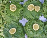 Weinblätter und Zitronenscheibe Stockfotografie