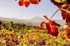 Weinblatt und ein großer Bergblick stockfotografie
