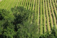 Weine in Nord-Italien Stockfotografie