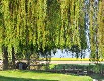 Weinende Weide über einer kleinen Brücke Lizenzfreie Stockbilder