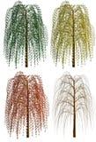 Weinende Weide in 4 Jahreszeiten getrennt auf Weiß lizenzfreie abbildung