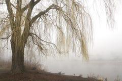 Weinende Weide mit nebelhaftem See Lizenzfreie Stockbilder