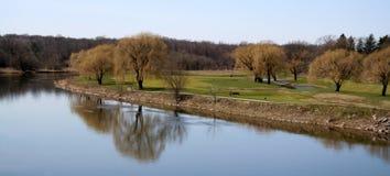 Weinende Weide-Panorama stockbilder