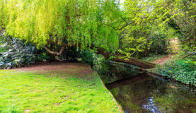 Weinender Willow Leaning Over New River-Weg, London Stockbild
