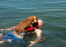 Weiner dog raft. Man with a dachshund dog on his chest floating in the river Royalty Free Stock Photos