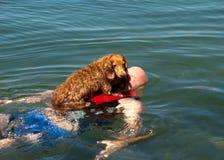 Weiner dog raft Royalty Free Stock Photos