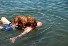 Weiner dog raft. Man with a dachshund dog on his chest floating in the river Stock Photography