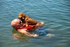 Weiner Hundefloß Lizenzfreies Stockfoto