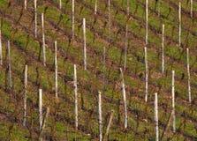 Weinfelder in der deutschen Landschaft lizenzfreie stockbilder