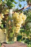 Weinflasche und Weinstock stockbild